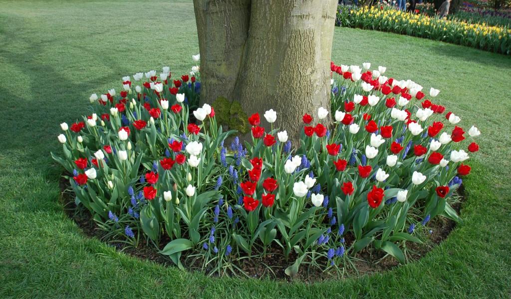 20150327_Tulips_006