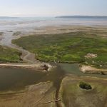 20160804_Fir Island Farm Estuary Restoration Project2